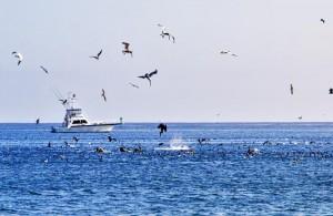 Moreton Bay Fishing